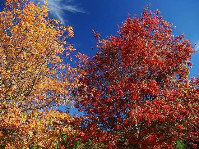 A beleza do Outono no Gerês