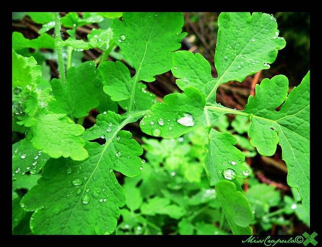 Verde é a cor mais bela do Gerês