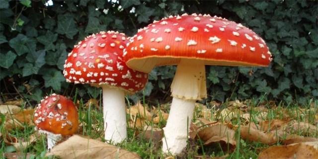Cogumelos na Serra do Gerês