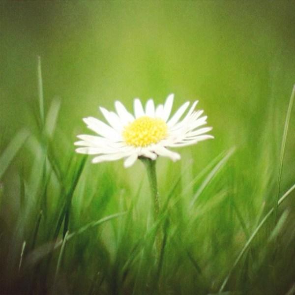 Independentemente da estação do ano há sempre uma Flor na paisagem do Gerês !!!