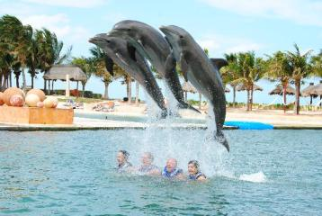 Delphinus-Dreams-Cancun