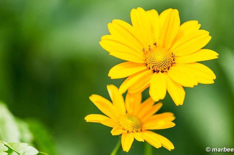 緑色の世界 そこには黄色い花が咲く