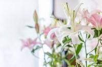 白いユリの生花 もう夏ですね