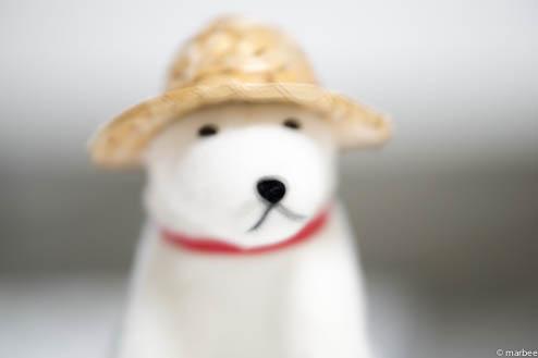 お父さん犬ISO100