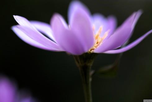 Flowers shining in the dark