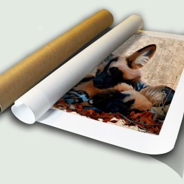 Wild Dogs Rolled Canvas