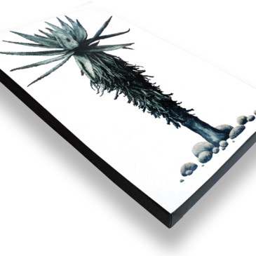 Aloe III – Archival Canvas Print Stretched