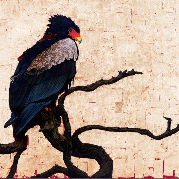 Marc Alexander | Bateleur Eagle I