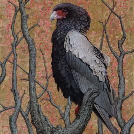 Marc Alexander | Bateleur Eagle II