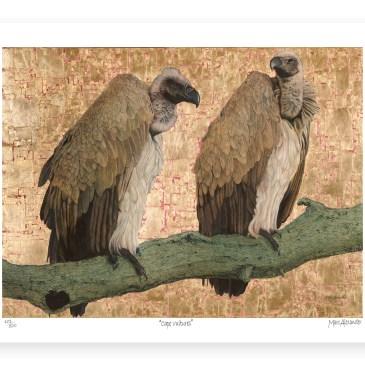 Cape Vultures – Archival Paper Print