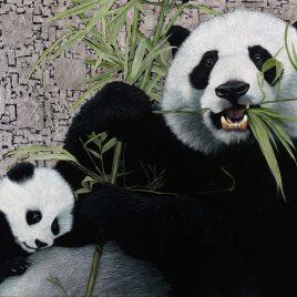 Marc Alexander | Giant Panda