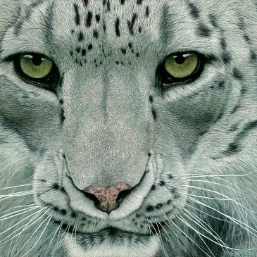 Marc Alexander | Snow Leopard II | In The Balance