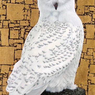 Marc Alexander | Snowy Owl | In The Balance