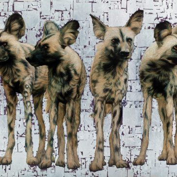 Wild Dogs Pack of 4