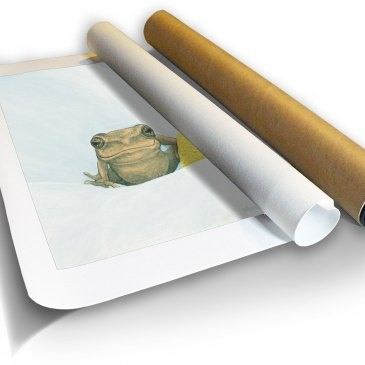 Reed Frog I – Archival Canvas Print in a Tube