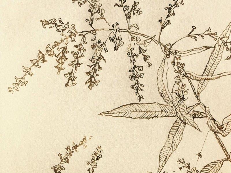 Gioia Marchegiani - Sketches