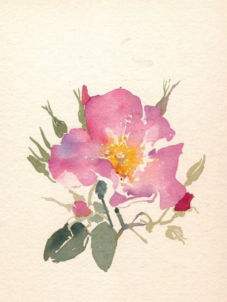 Gioia Marchegiani-Acquerelli di Rose