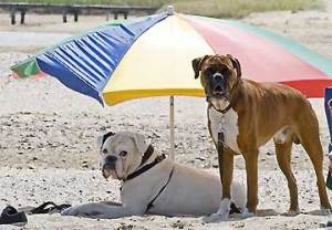 cani_spiaggia