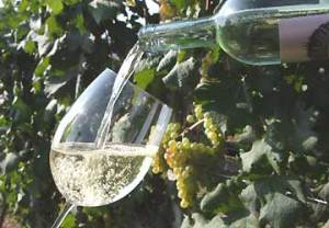 vino_bicchiere_vitigno