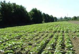 coltivazione-marche