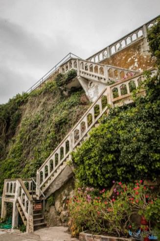 Végétation dense à Alcatraz