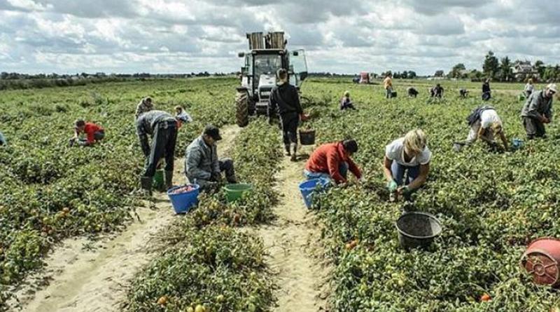 Marchiodoc - Braccianti agricoli
