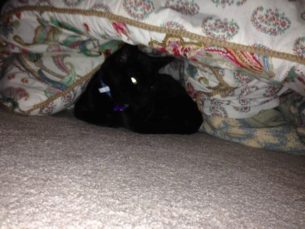 kitty in hiding