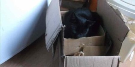 """""""I can't recycle the old cardboard boxes because my cat is still using them."""""""