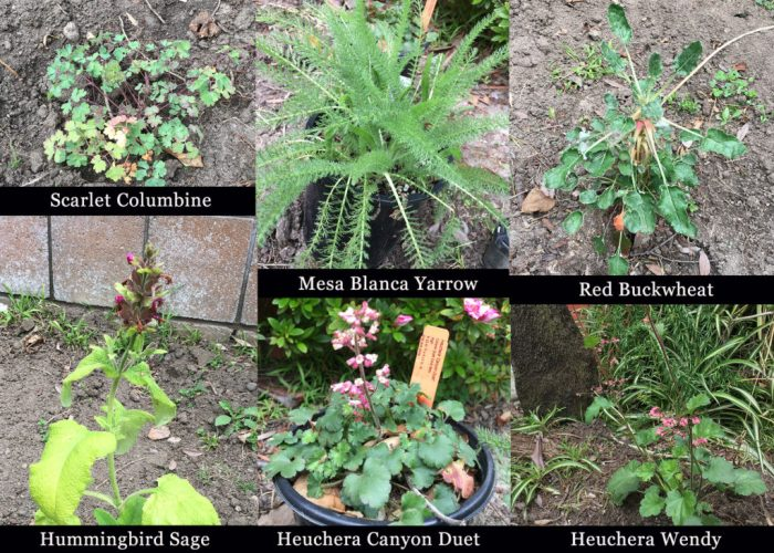 native plants, authors in bloom blog hop 2017