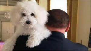 Dudù, il cane-immagine di Berlusconi.