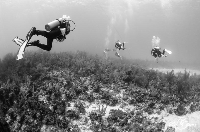 Reef lagoon