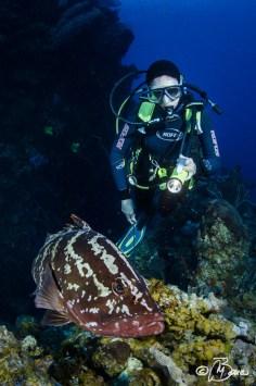 """Epinephelus striatus - Little Cayman """"Lea Lea's Lookout"""""""