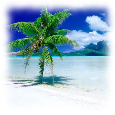 Palma su isola deserta