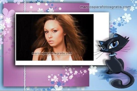 marcos de fotos de gatito