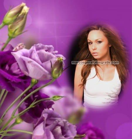marcos de rosas violetas