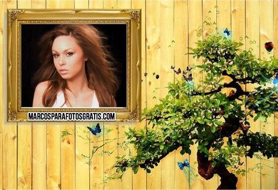 marcos para fotos con bonsai