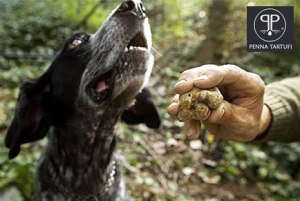 Cani da Tartufi Migliori Razze Addestramento Prezzi Vendita