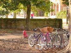 Jenny Photo of Bicycles