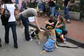 2009-Mystic-Krewe-of-Barkus-Mardi-Gras-French-Quarter-New-Orleans-Dog-Parade-0477