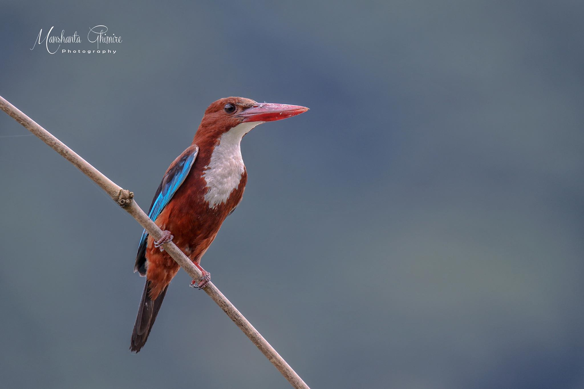 WT king fisher