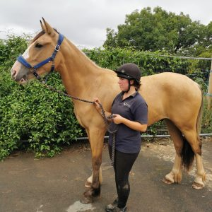 Diangelo now 16hh