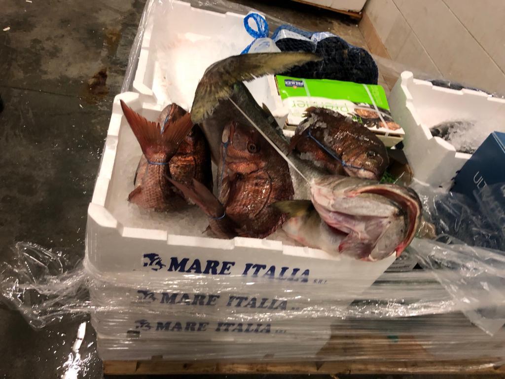 fornitura ittica roma