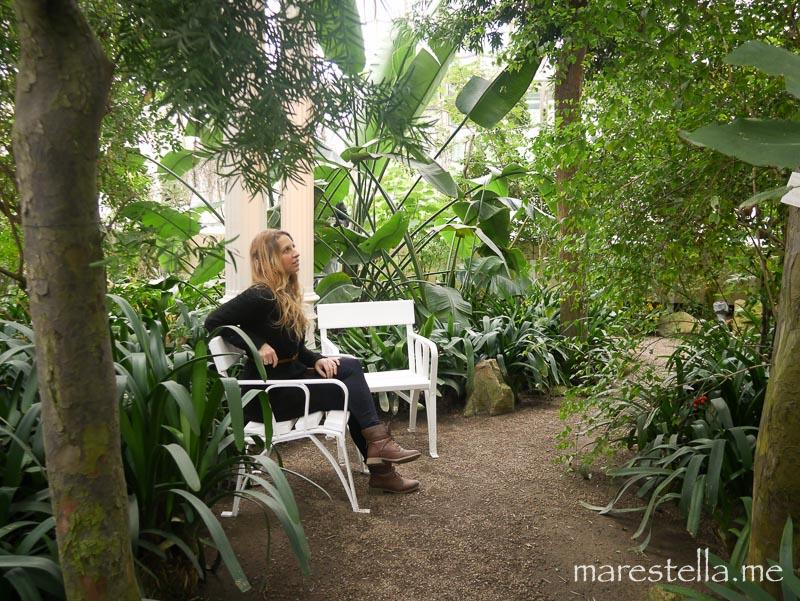 Palmenhaus_marestella (1 von 20)