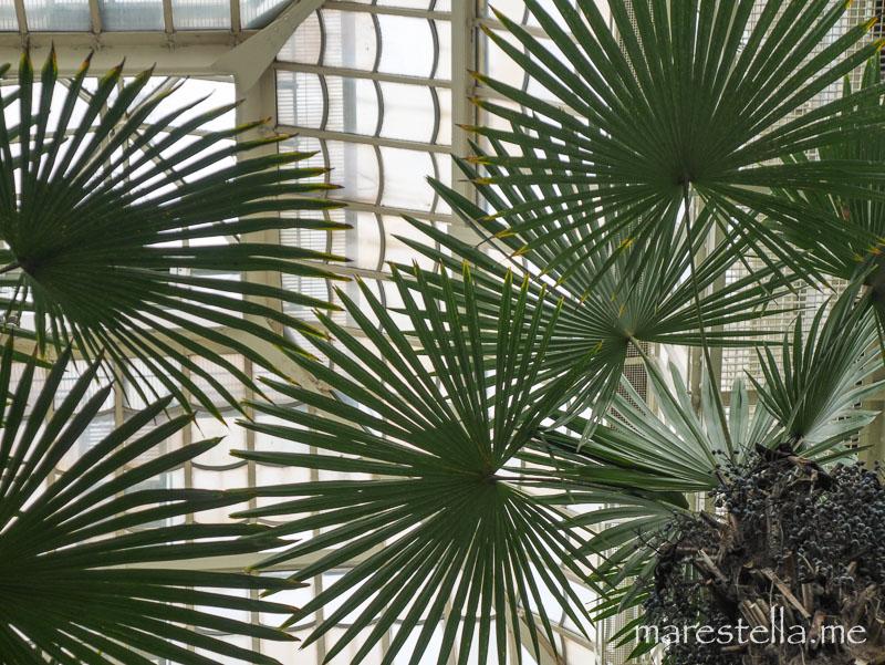 Palmenhaus_marestella (10 von 20)