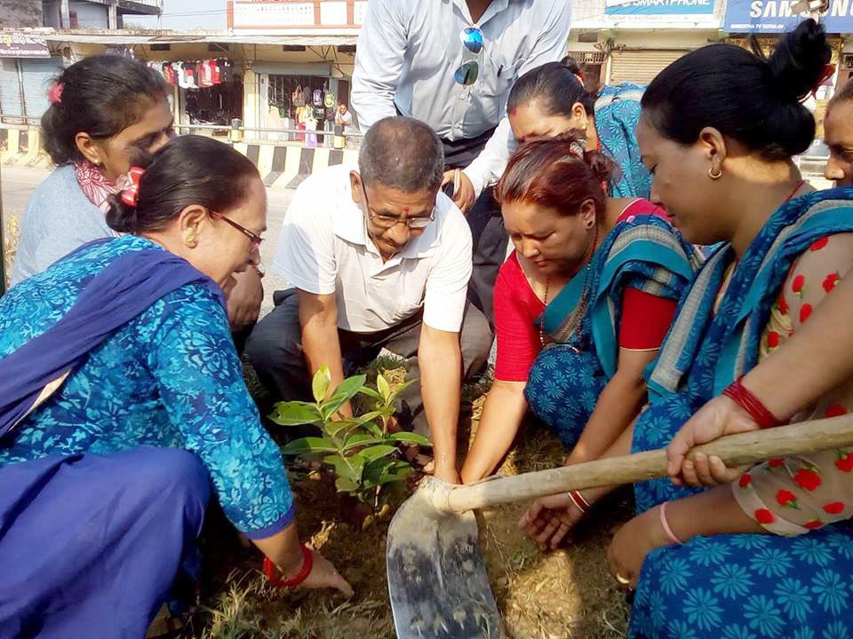 सेवा प्रा.लि.द्धारा कोहलपुरमा वृक्षारोपण
