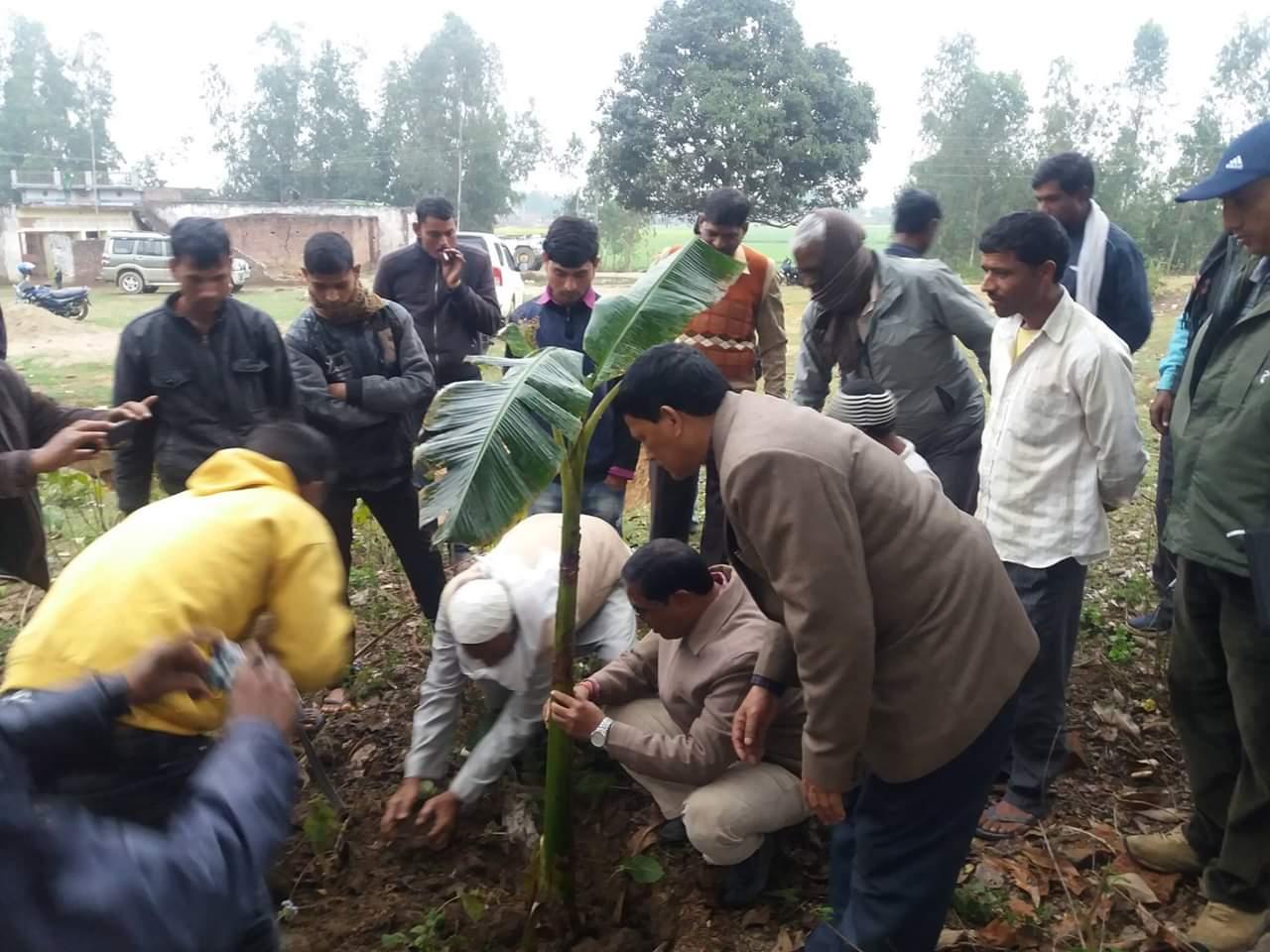 बाँकेको डुडुवाका दुई गाउँमा केराको  बिरुवा रोपी स्मार्ट कृषि गाउँ घोषणा