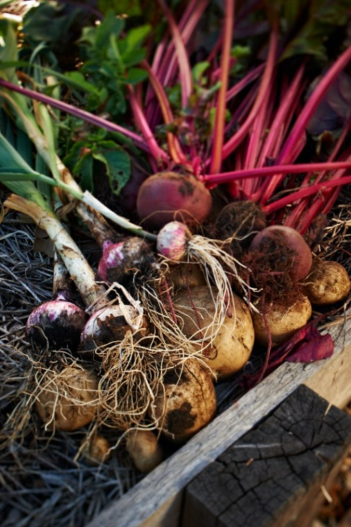 021_STOCK_Margaret River_Burnside Organics 20121112