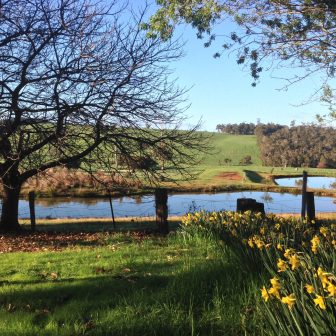 Chestnut Brae middle dam and daffodils 172