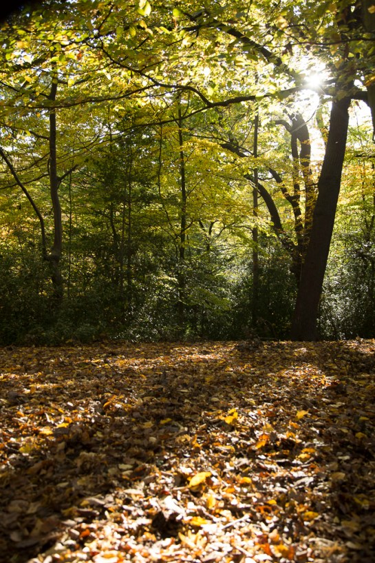 Photo: autumnal woodland scene, autumn leaves, sunlight through trees, by British Photographer Margaret Yescombe, North London, FO6A0607