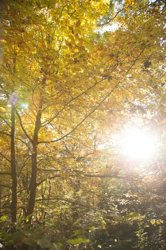 Photo: beautiful sunset through autumn trees, autumnal woodland scene, by British Photographer London, Margaret, FO6A0630